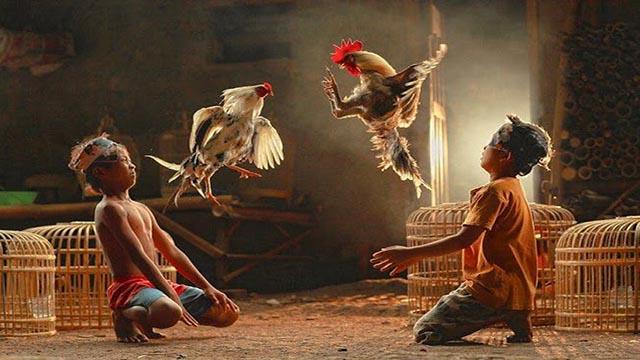 Sabung Ayam Rupiah