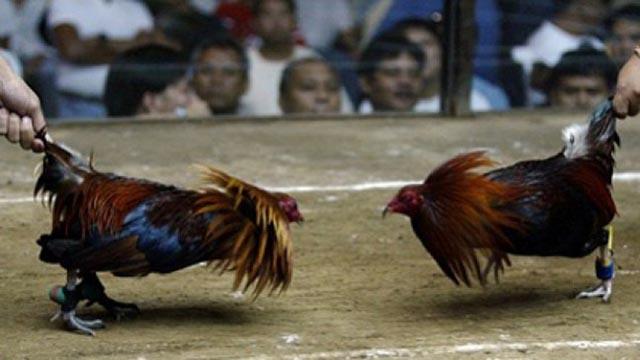 Situs Judi Sabung Ayam Online Paling Favorit