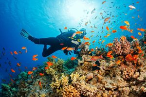 Picking The Right Marine Expeditions
