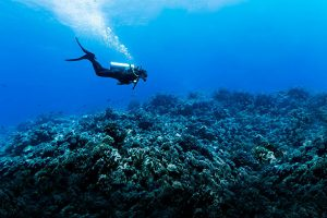 Useful Tips for Tourists on Geographic Marine Expeditions