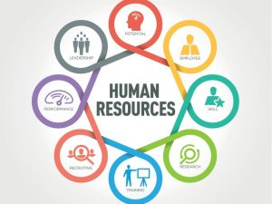 Importance Of Human Resources In A Company