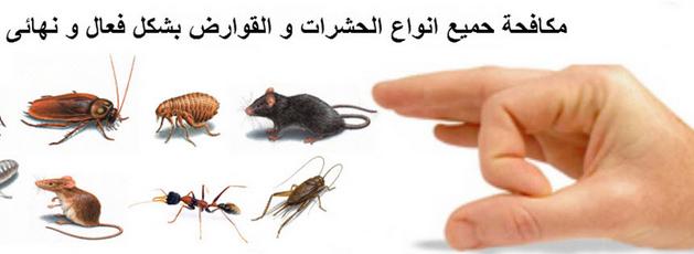 طريقة لطرد الحشرات من البيت