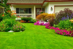 How To Get Greener Grasses For Your Lawn