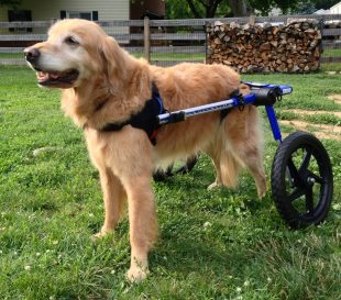 Perception and Service Dogs