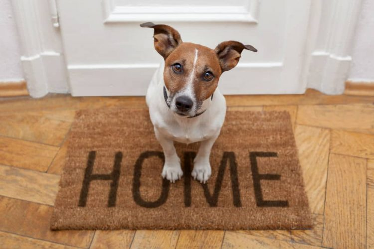 Get Best Rated Dog Door At Discounted Price Top Rated Dog Doors