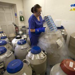 Perbankan Sperma di Lab Frisco Menjaga Kemungkinan Pengasuhan